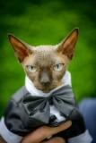 svatební-mazlíček-foto